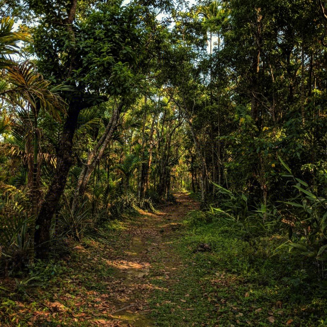 path to living roots bridge