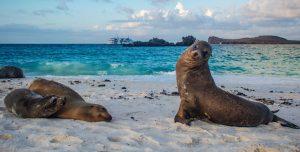 endemic species in galapagos islands