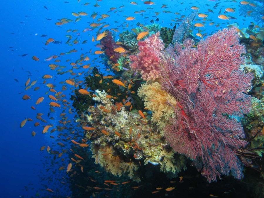 Great Astrolabe Reef