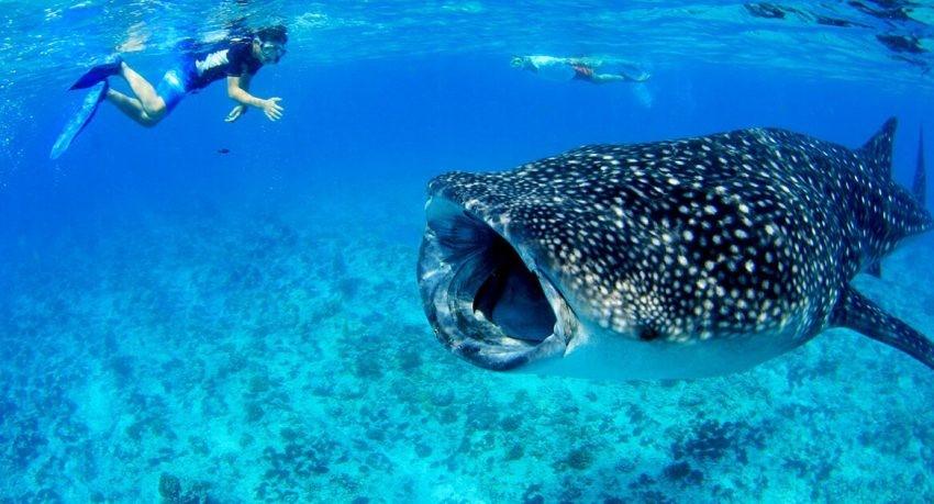 Earth's biggest fish