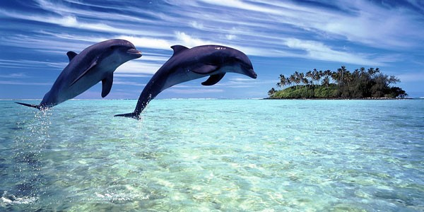 dolphin watching in maldives