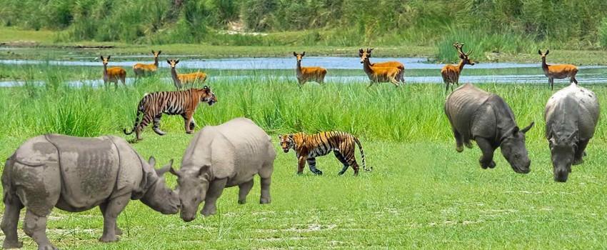 6)Chitwan National Park