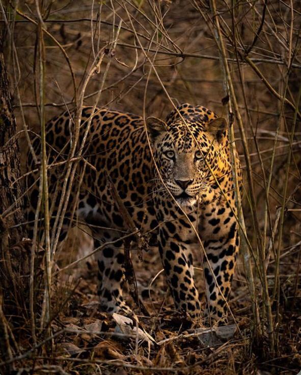 things to do in kabini