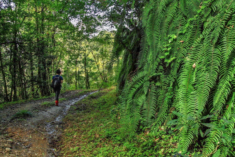 treks in himachal