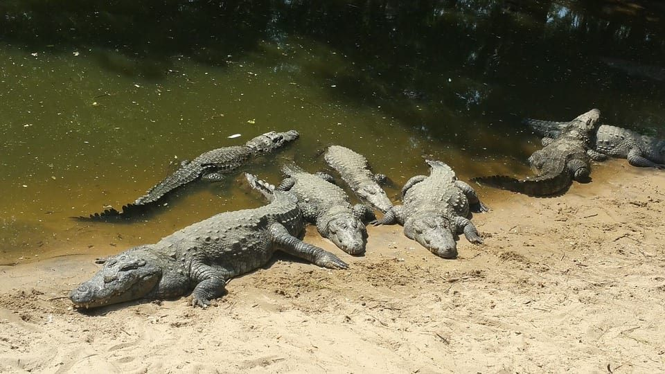crocodile infested rivers