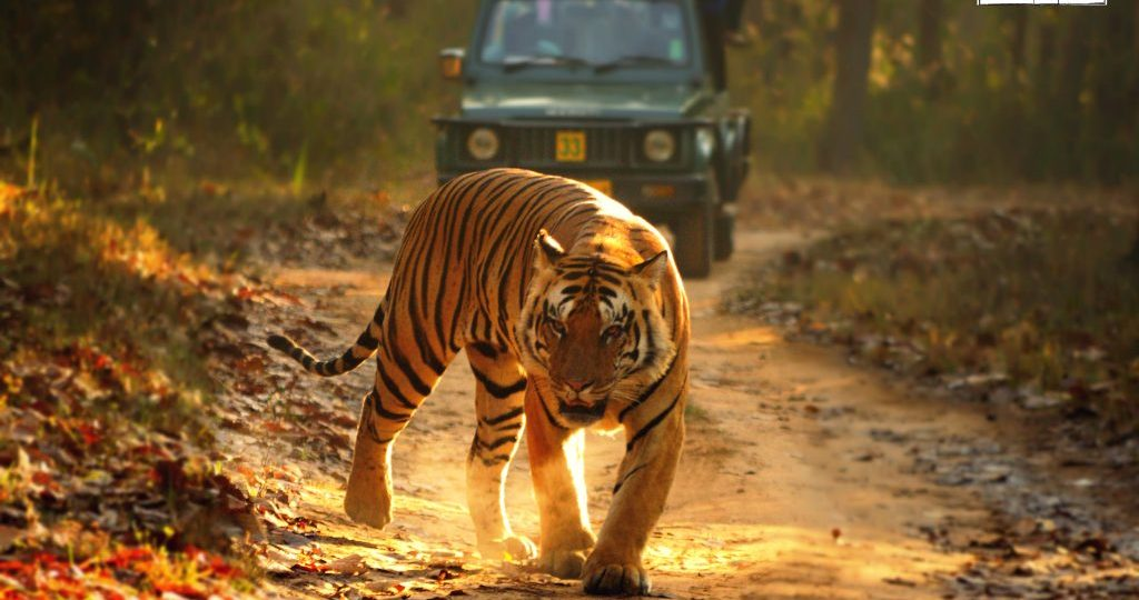 India's Best National Parks
