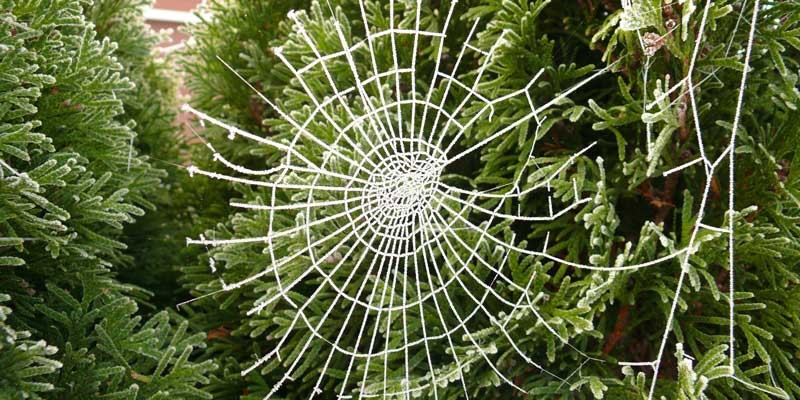 Decorate Christmas trees with cobwebs in Ukraine