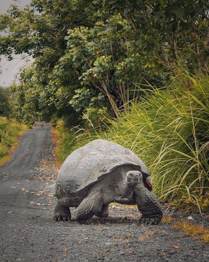 wildlife in galapagos