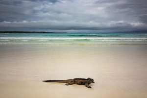 things to do in galapagos
