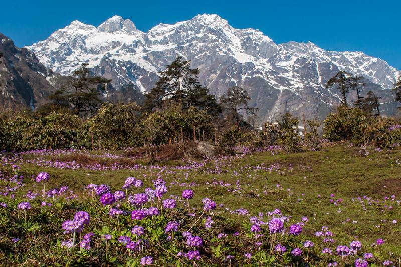 how to reach yumthang valley