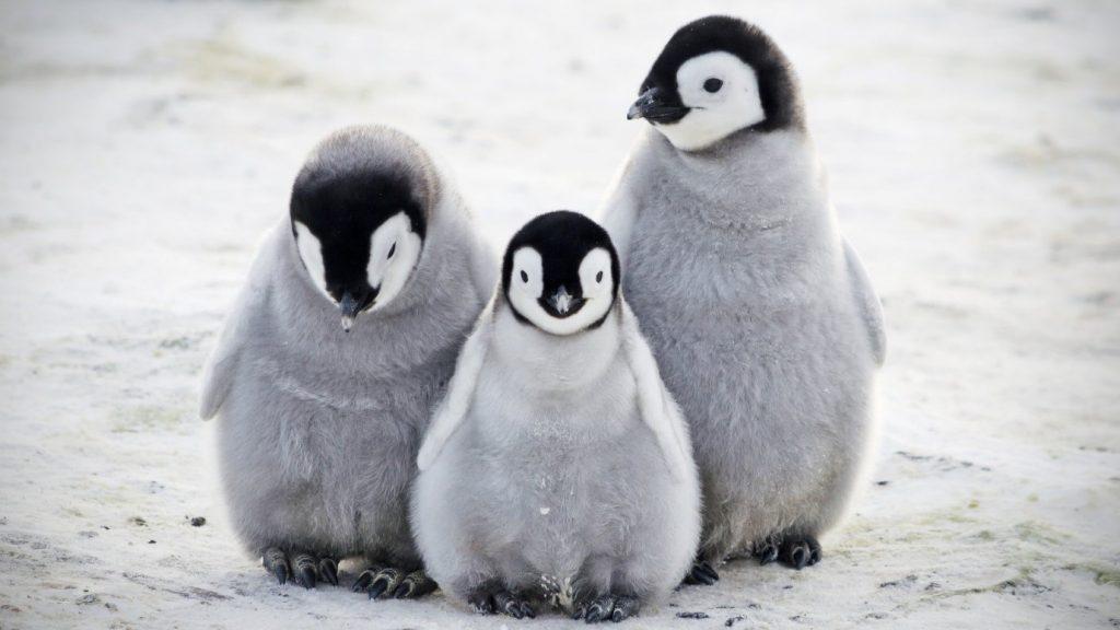 Five Places To Spot Penguins