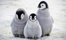 five places to see penguins